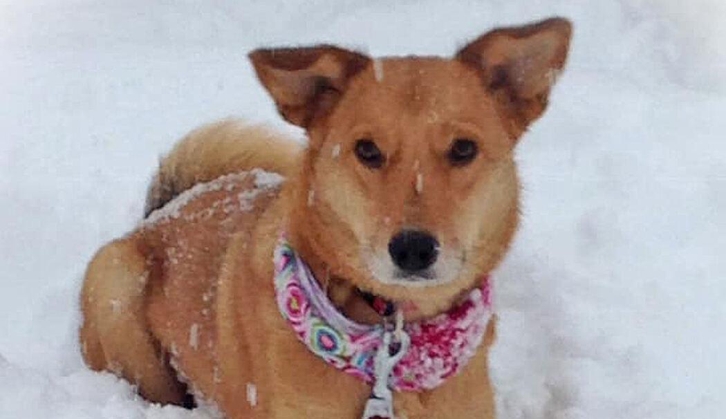 Vermisster Hund Teddy Kehrt Zurück