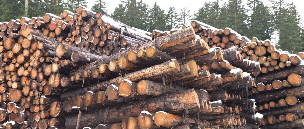 150 000 Festmeter Schneebruchholz im Forstbetrieb Berchtesgaden - Berchtesgadener Anzeiger